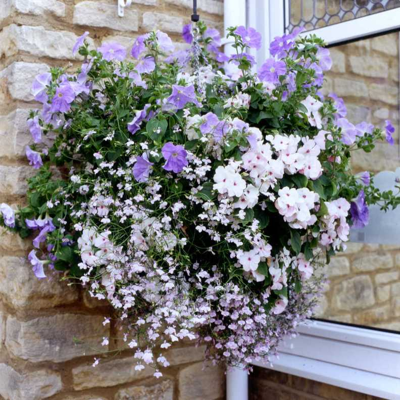Best plants for hanging baskets ideas with images summer hanging basket impatiens lobelia petunias 03g workwithnaturefo