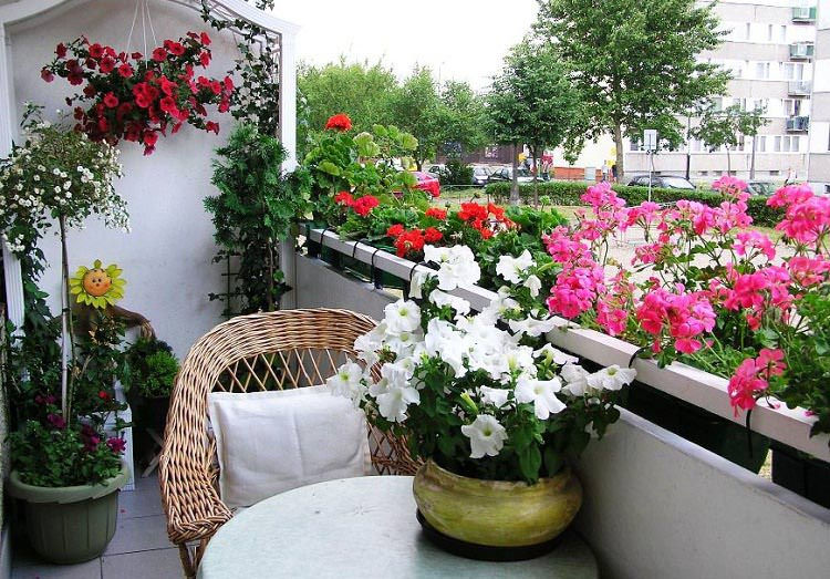 best-balcony-flowers.jpeg_mini