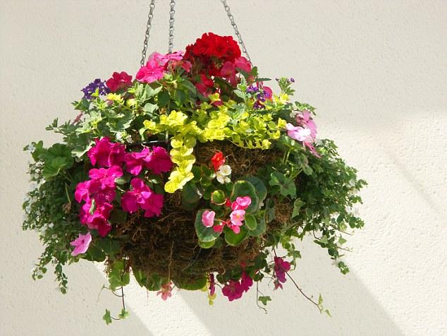 Indoor Hanging Plants Best Ideas About Indoor Plant Decor