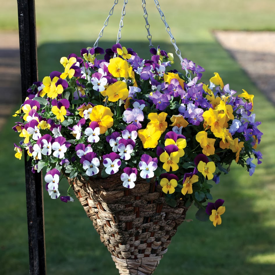 best hanging plant for garden
