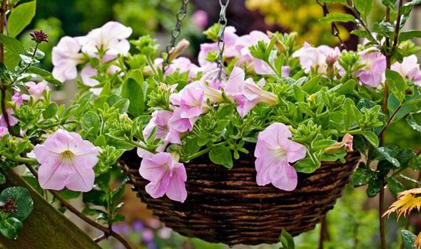 contemporary hanging baskets