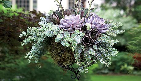 hanging basket flowers pictures