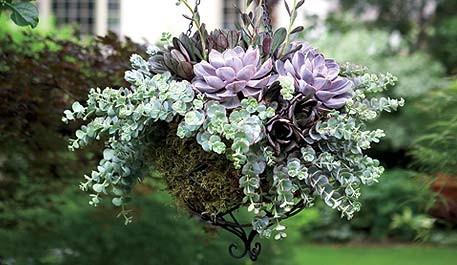 Shade Vegetable Garden Ideas