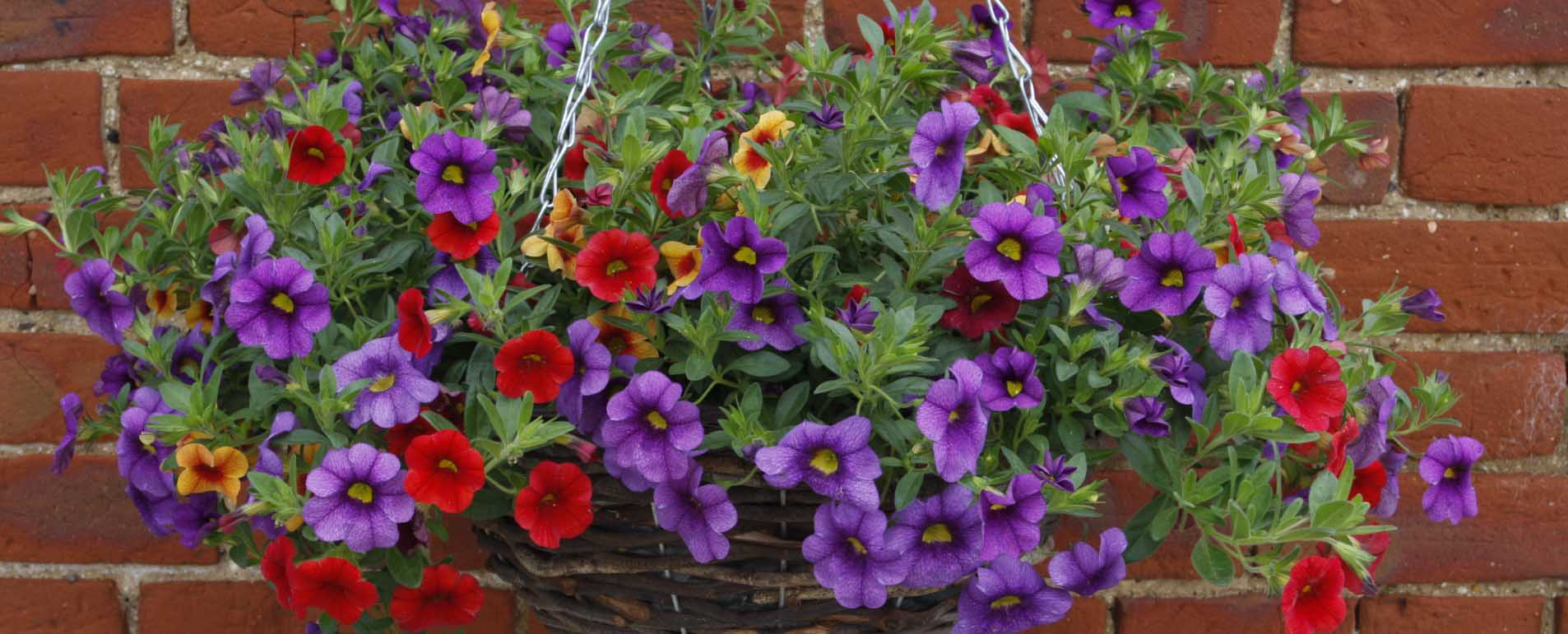 hanging-basket-header