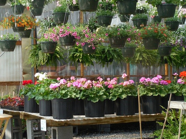 hanging basket plants ideas