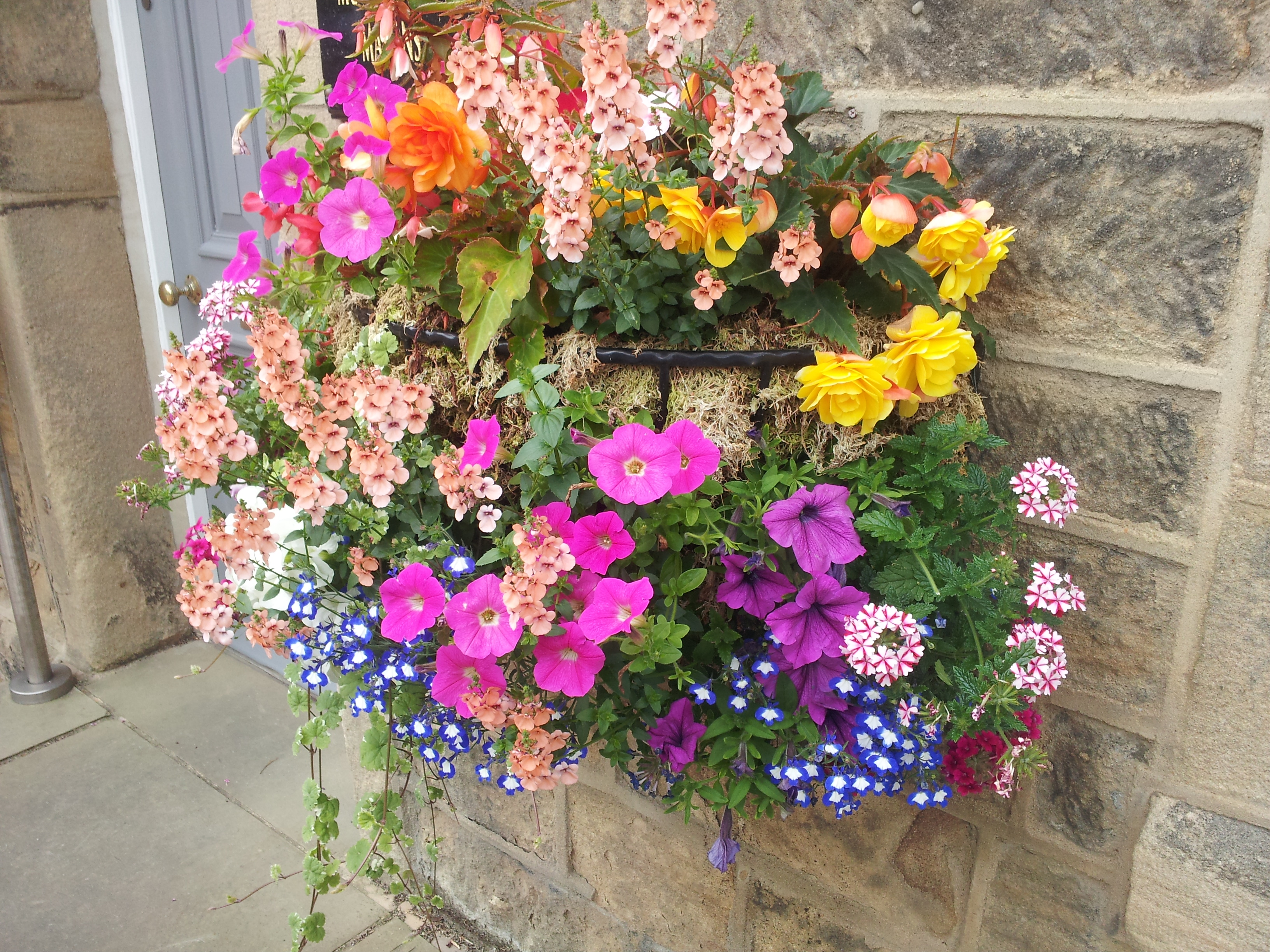 hanging flower basket ideas