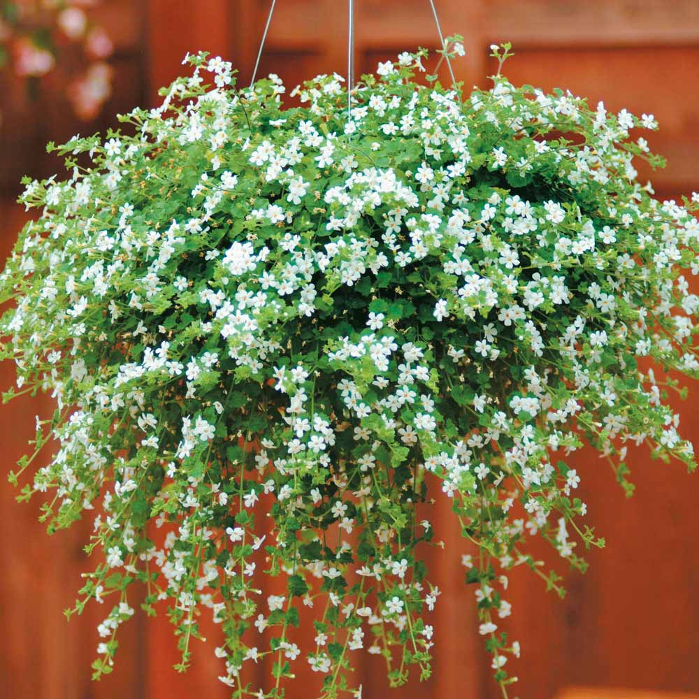 hanging plants outdoors