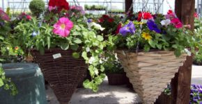 ready made hanging baskets ideas