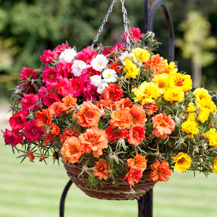 ready made hanging baskets