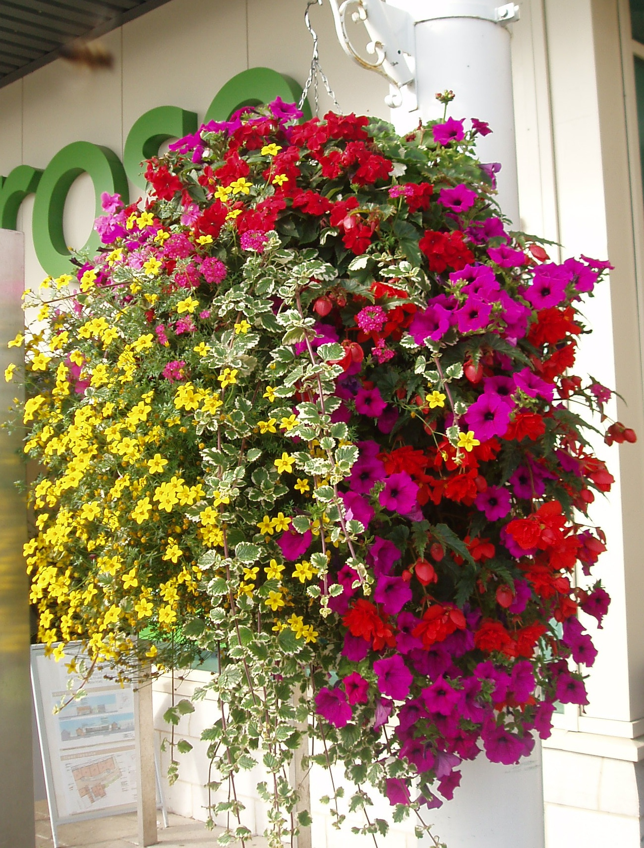 Hanging Plants Baskets In Full Sun
