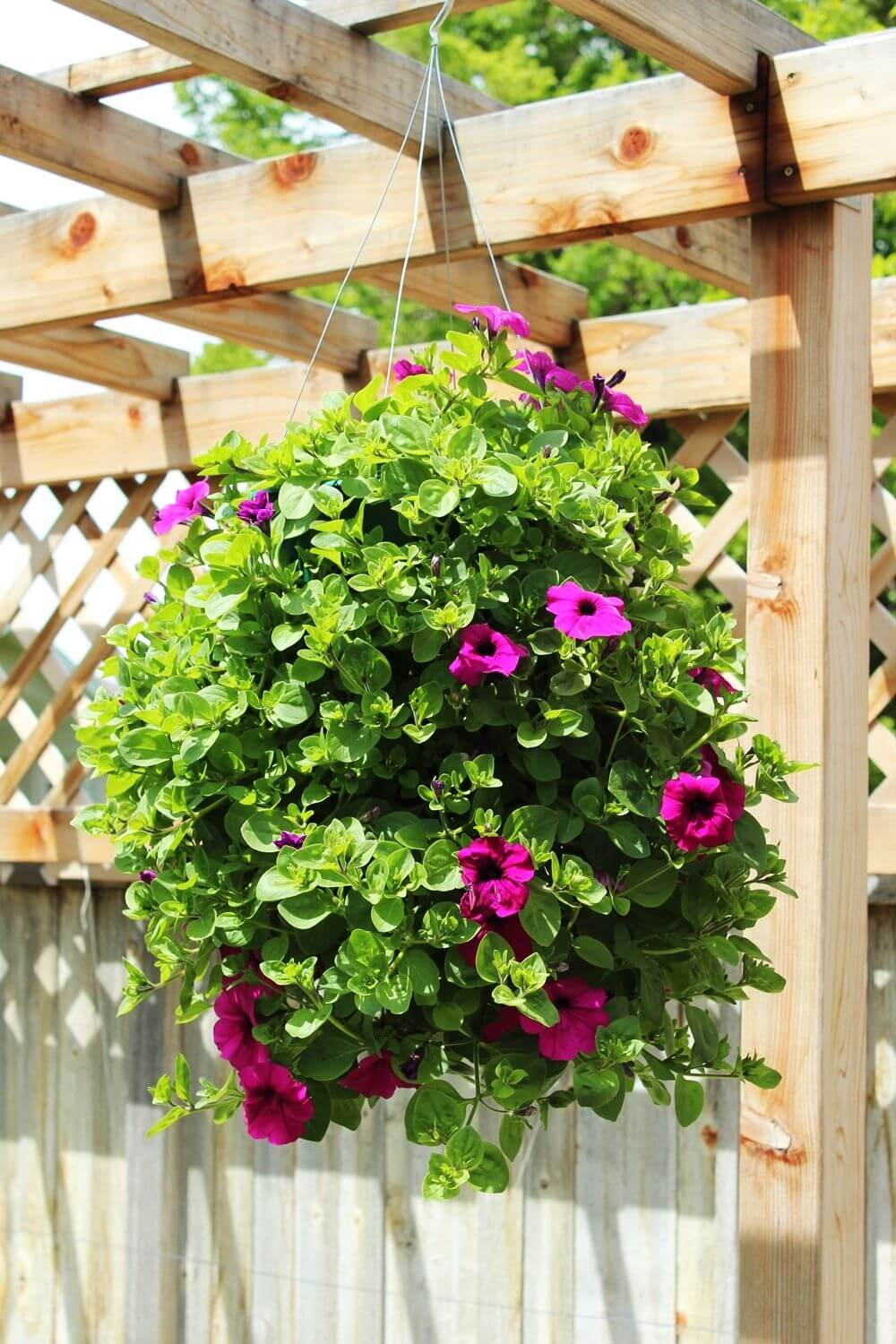 Wall Hanging Baskets For Plants