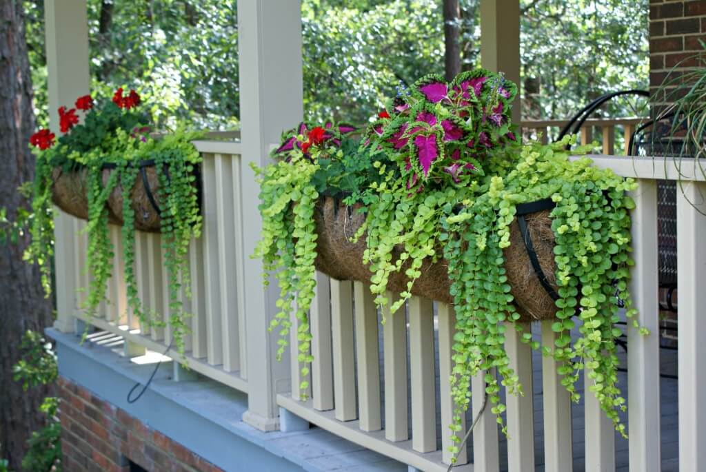 Wall Mounted Plant Pots Holders
