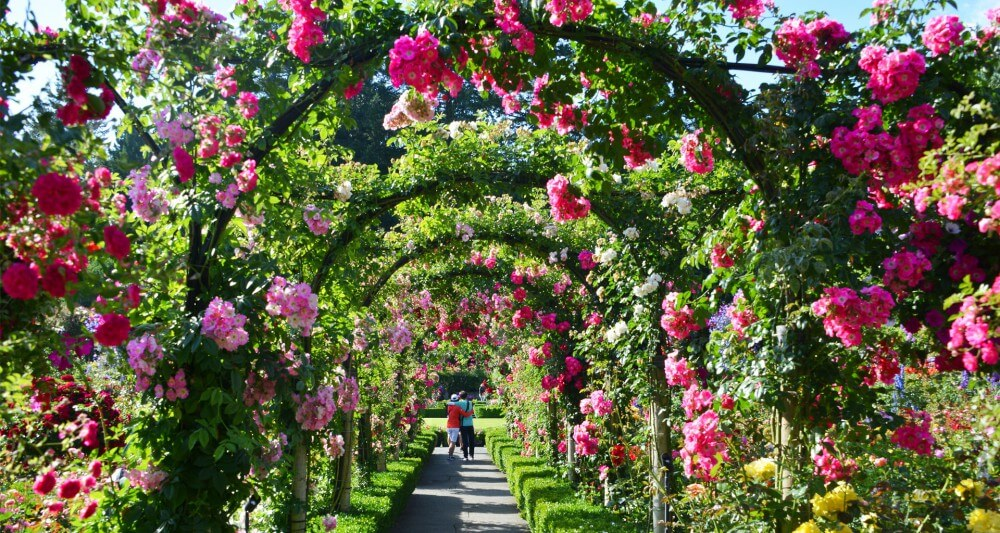 beautiful-arch-rose-garden-ideas