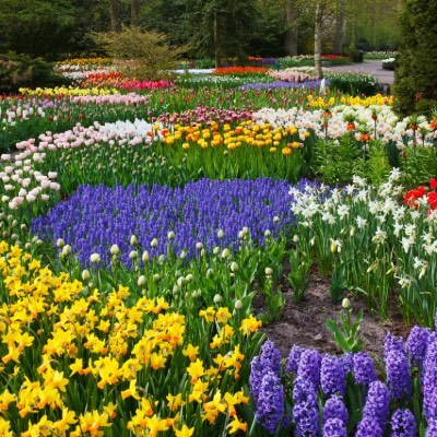 beautiful-flower-garden-designs