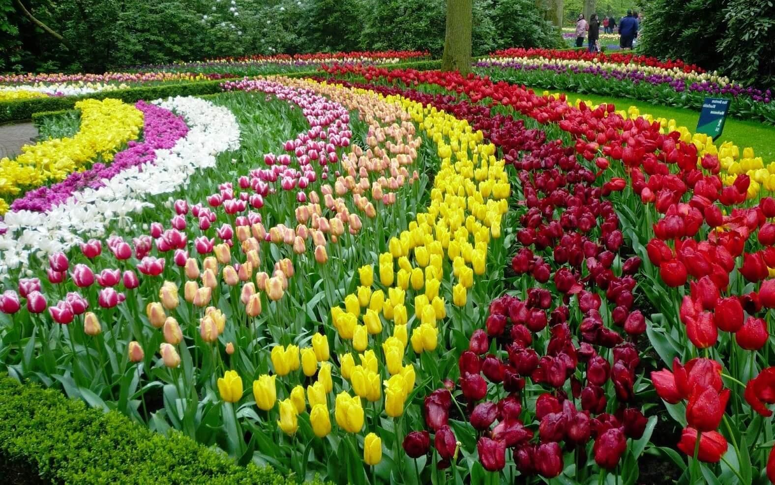 garden flowers uk