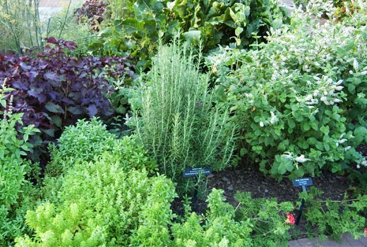 herbs garden design ideas