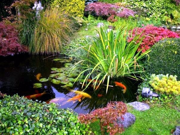 koi-pond-in-the-garden-tips-on-how-to-select-the-fish-pond-and-breed-0-681947064 (1)