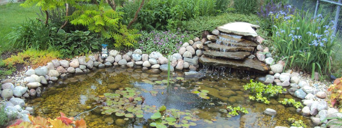 koi water garden