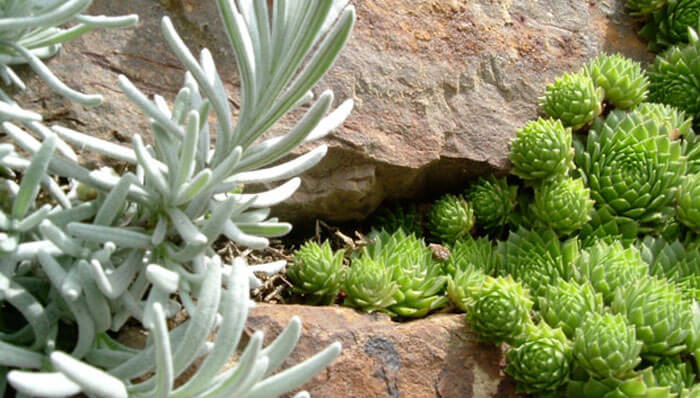 rock garden design ideas UK
