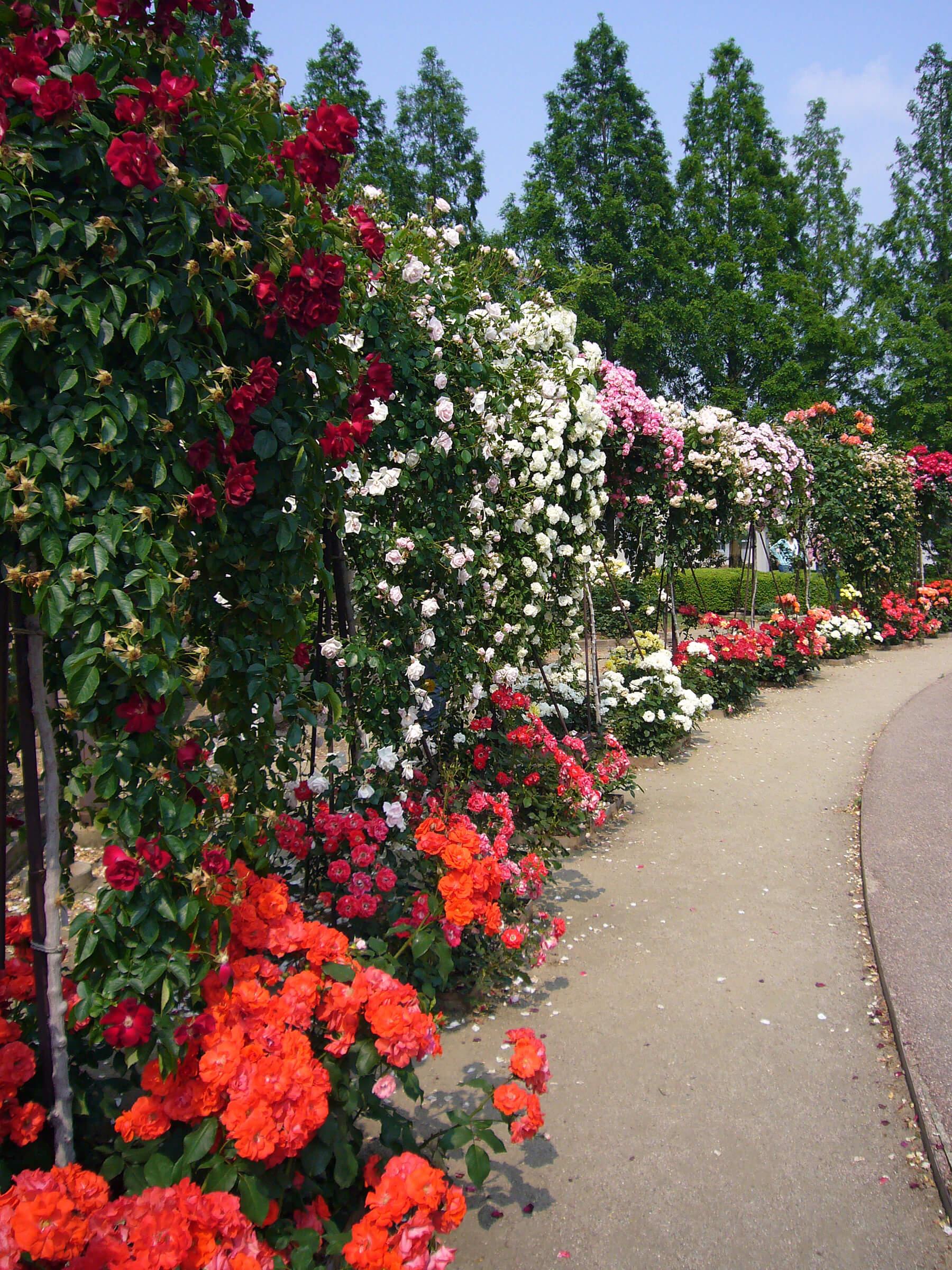 rose garden center