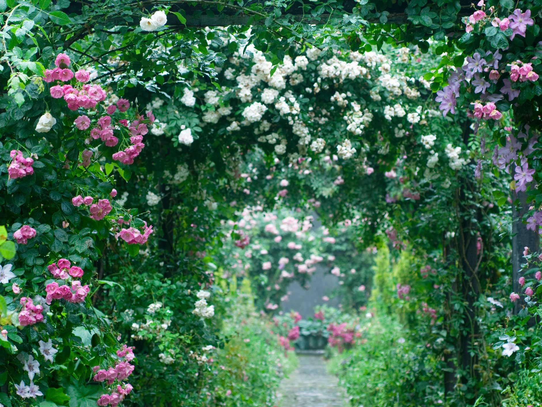rose-garden ideas