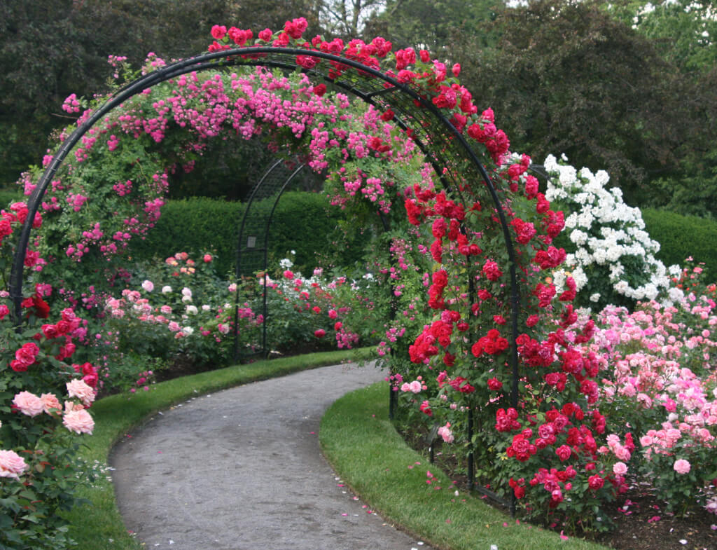 rose_garden_design_ideas