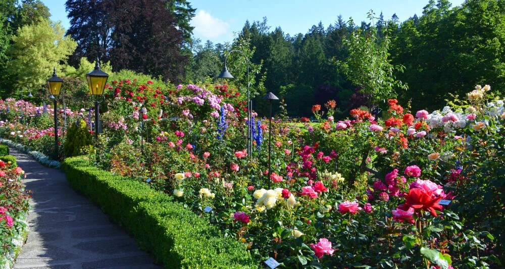 trump rose garden